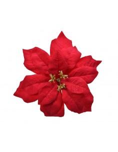 Poinsettia rossa  Si...